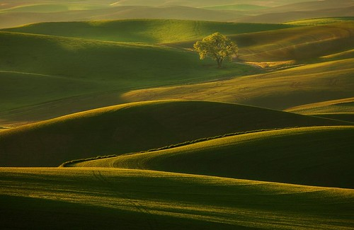 The power of light - The Palouse