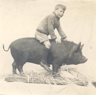 Mounted Pig