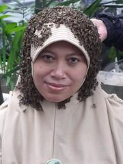 Lebah 3
