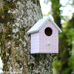 Pretty bird house on the tree
