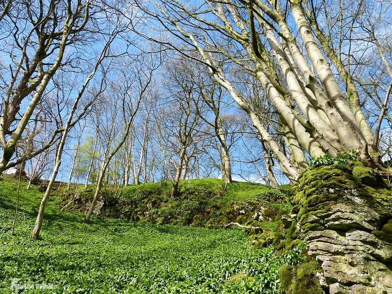 P1070551 - Wedber Wood