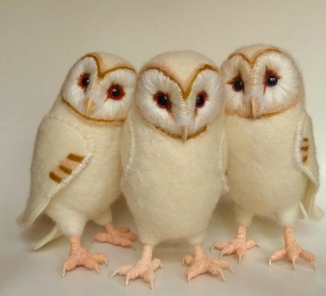 Baby barn owl images - photo#10