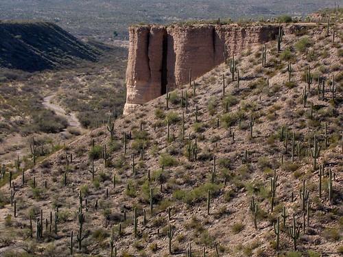 arizona usa mountains cacti landscapes flickr desert unitedstatesofamerica gps 2011 panoramio saguarocactuscarnegieagigantea camcanonpsxs10