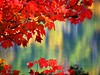 Red Maple and Autumn Lake Reflection