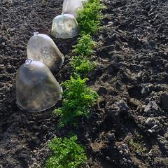 Cloches de verre - Photo of Saint-Lactencin