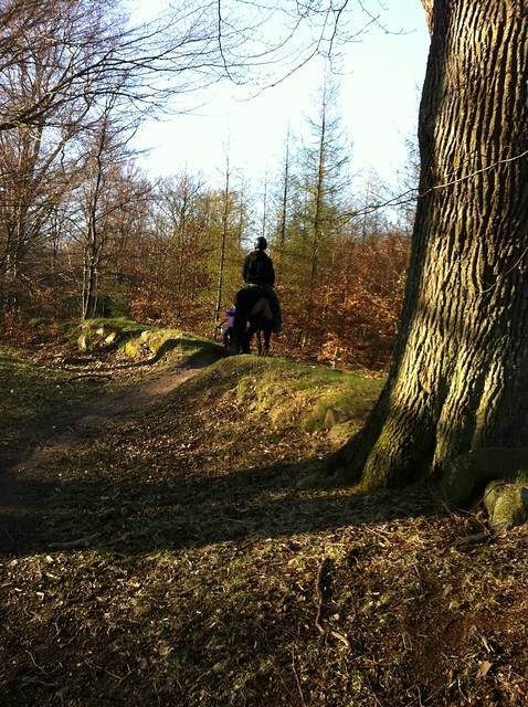 skogstur film