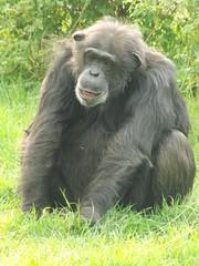 ZSL Whipsnade Zoo.