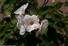 desert_botanical-8