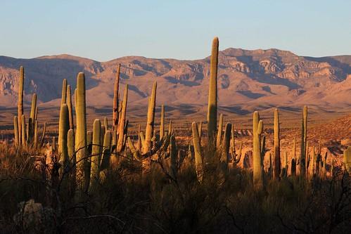 arizona usa mountains cacti landscapes flickr desert unitedstatesofamerica gps 2011 saguarocactuscarnegieagigantea camcanonrebelt3i