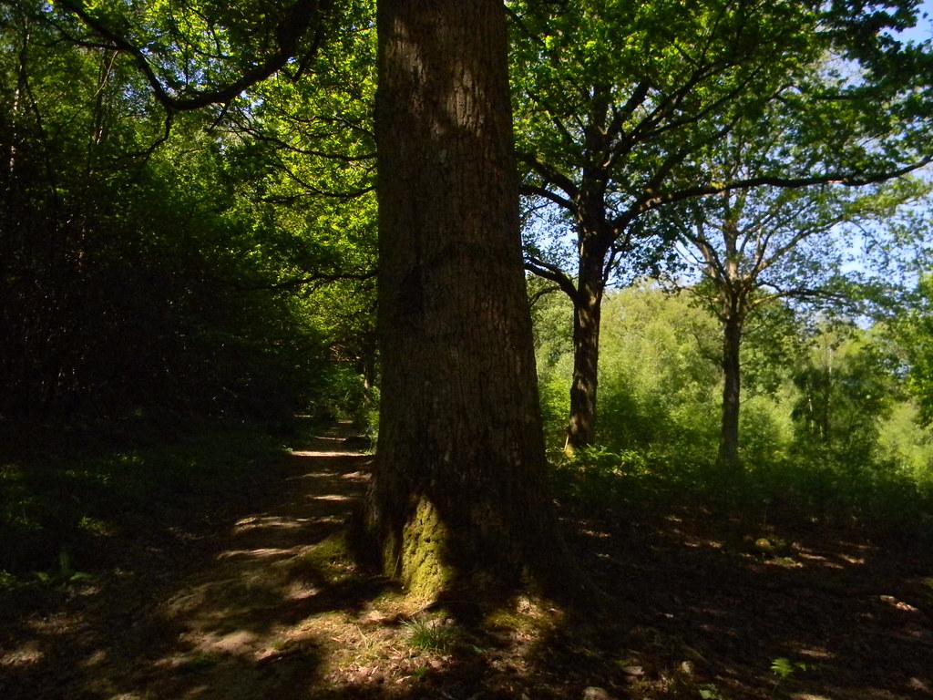 trees Ockley to Warnham
