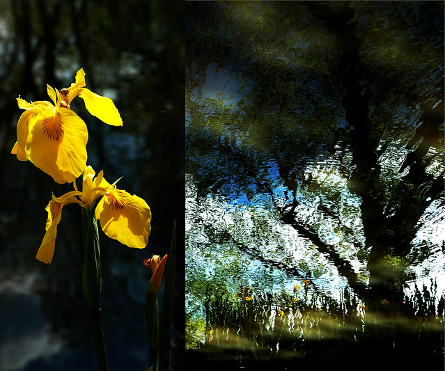 Water Garden Music - Spring - Yellow in the Sun