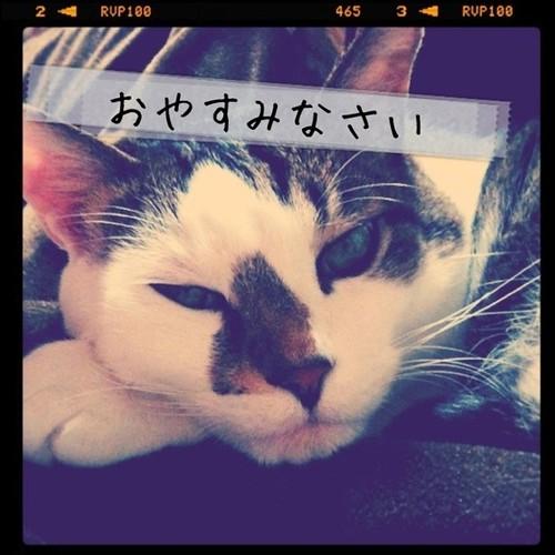 うちの猫からのメッセージをお読みください #manymize #cat #neko - 無料写真検索fotoq