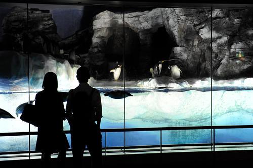 20110602 Nagoya Aquarium 9