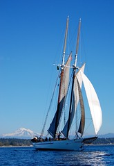 yacht racing, sail, sailboat, schooner, sailing, sailboat racing, keelboat, vehicle, sailing, sea, mast, lugger, tall ship, watercraft, boat, brigantine,