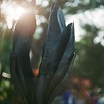 Growing Shell by Eva Drewett