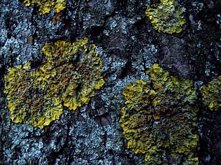 (105/365) Tree landscape