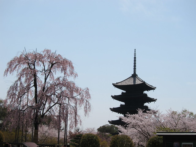 Cherry blossoms at Tō-ji temple in Kyoto, Japan; 東寺の桜、京都