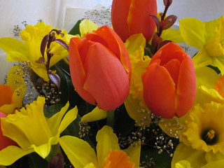 A Bouquet of Tulips and Daffodils