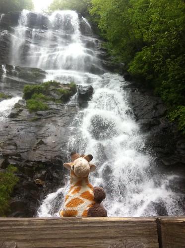 gerald giraffe amicalolafallsstatepark