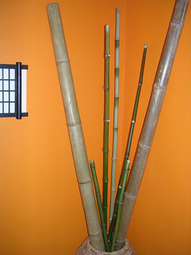 Interior bamboo poles flickr photo sharing