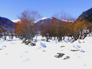 Gilgit, Pakistan - Red Trees and Snow