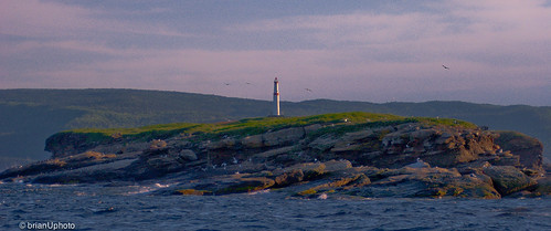 sunset lighthouse birds island novascotia boattour birdislands