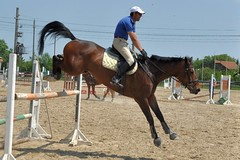 animal sports, equestrianism, english riding, modern pentathlon, eventing, mare, stallion, jumping, show jumping, hunt seat, equestrian sport, sports, recreation, outdoor recreation, equitation, horse, jockey,