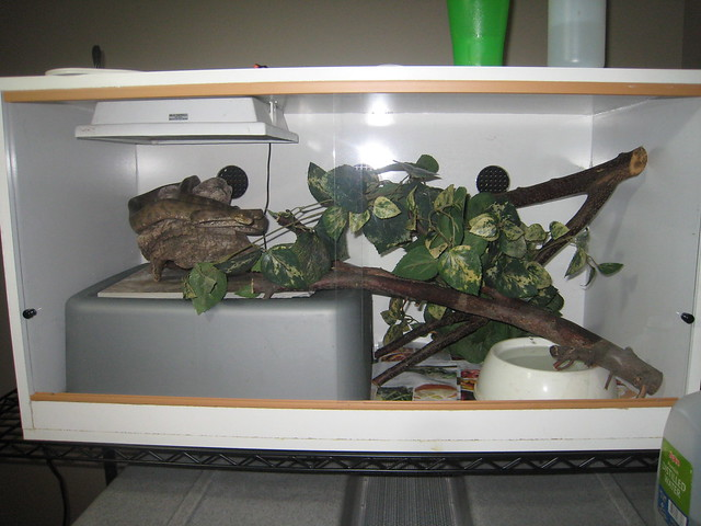 how to make a melamine reptile enclosure