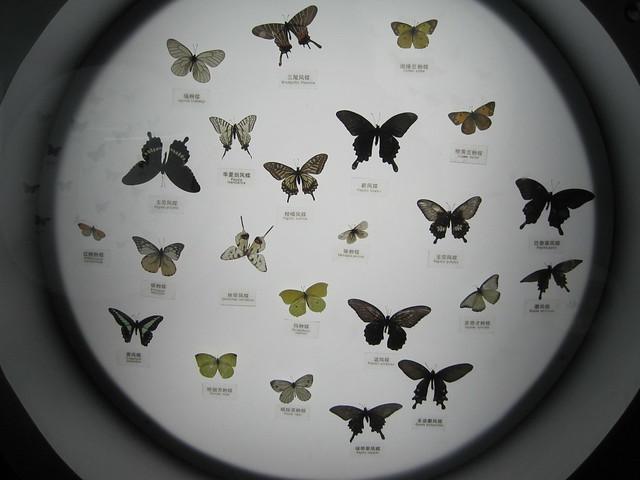 蝴蝶、昆虫类 (2)