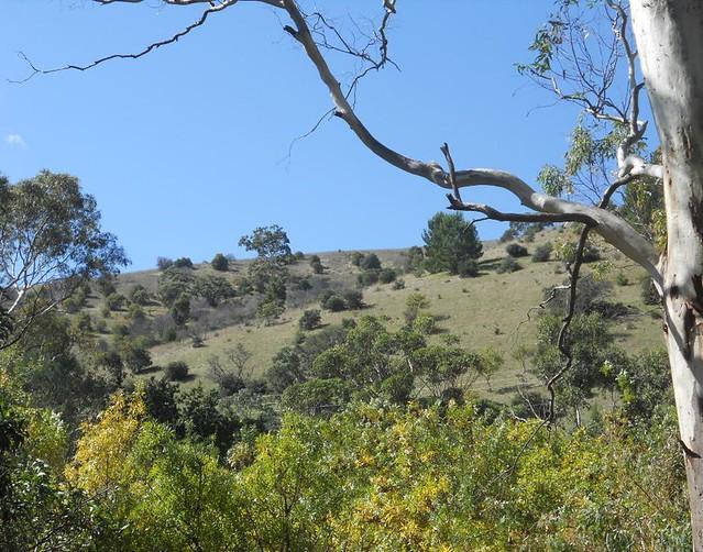 Header of Adelaide Hills