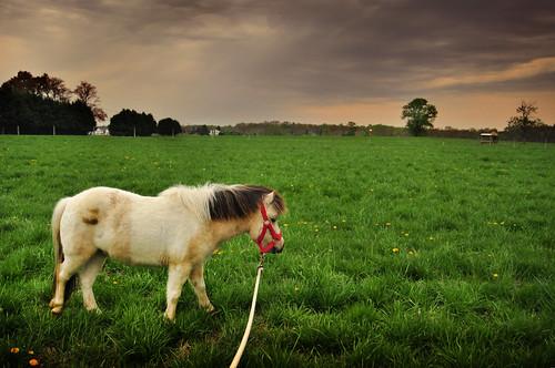 weather landscape farm stormy pony delaware agriculture dsu hickoryhillfarm ©courtnayjaniak 2011farmtour