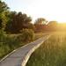 Appalachian Boardwalk Trail