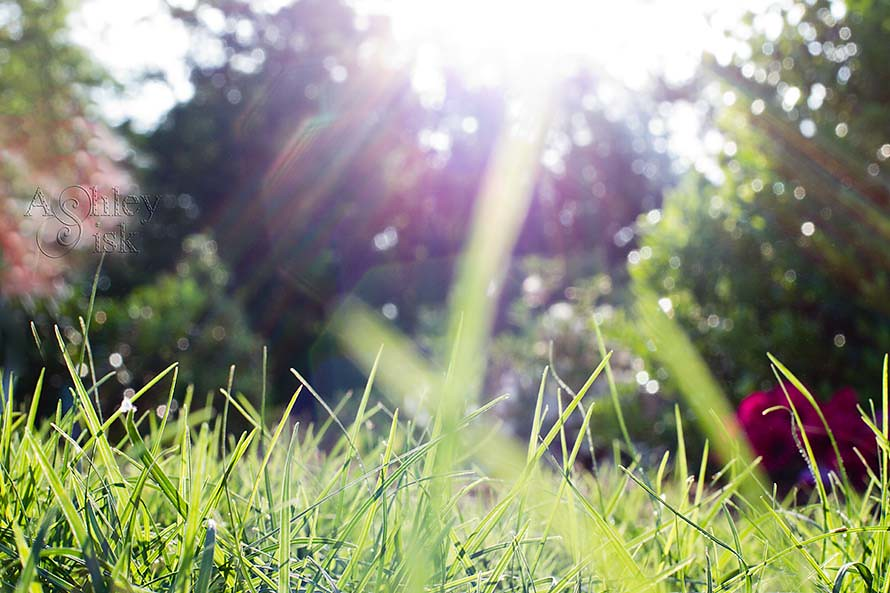 Sunlight Bokeh RS