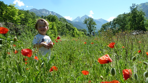 happy boy in poppy field