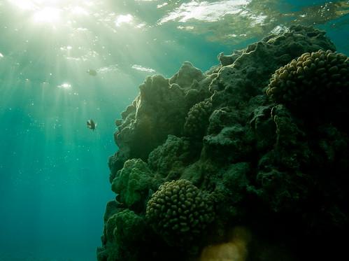 Sunrise on the coral reef, Shark Island lagoon