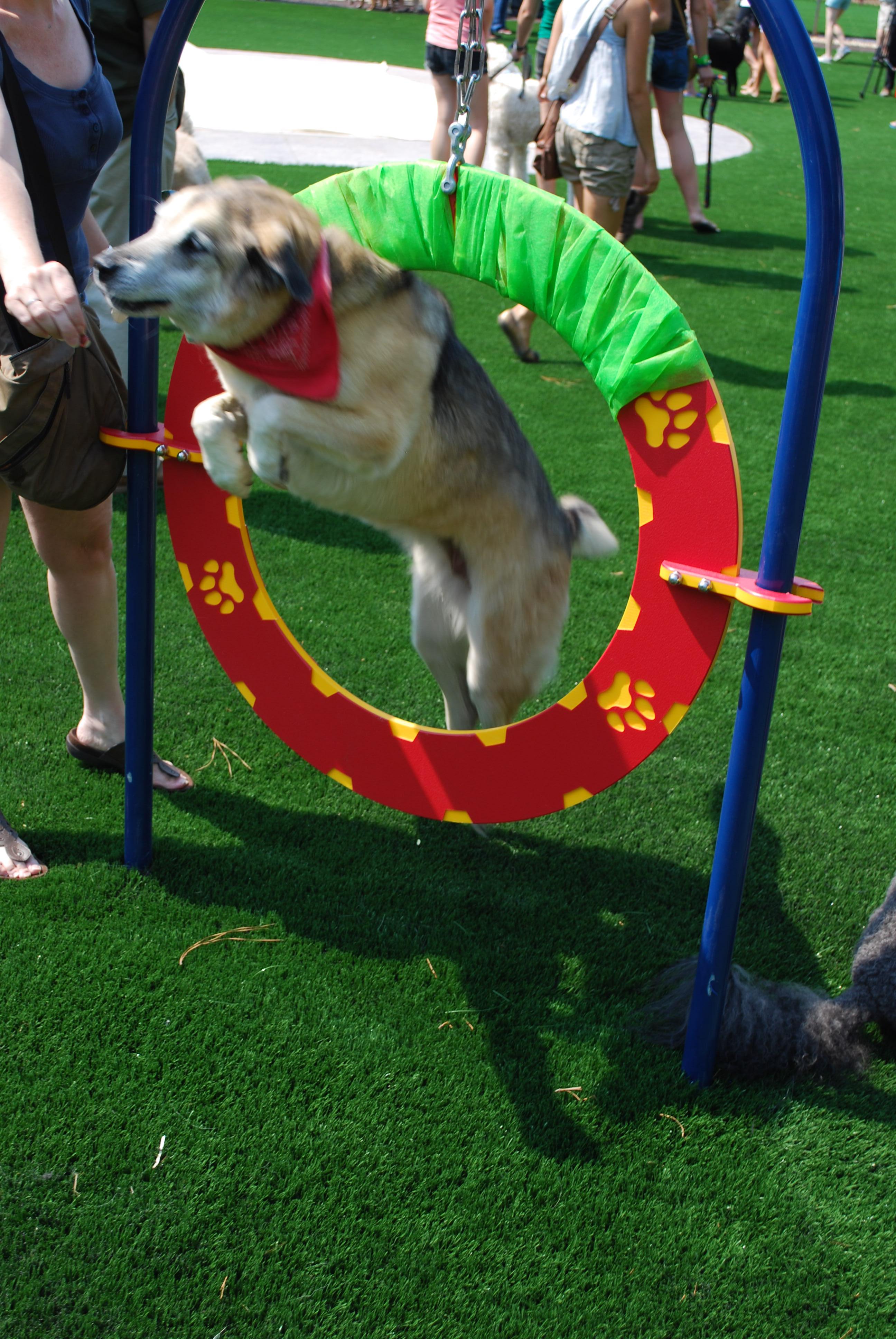 Dog Park Newtown