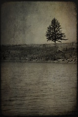 Black River Harbor - Lonely Tree