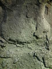 Stone (Free Texture)