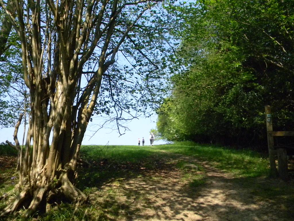 Past a big tree Frant to Tunbridge Wells