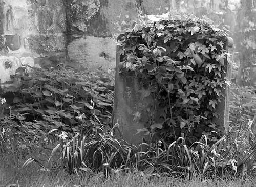 Overgrown Headstone