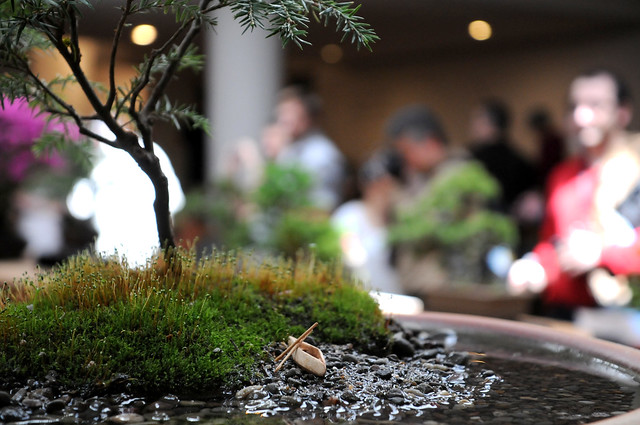 The bonsai display in the Steinhardt Conservatory. Photo by Mike Ratliff.