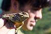 "<a href=""http://www.flickr.com/photos/ken-ichi/5679145188/"">Photo of Phrynosoma blainvillii by Ken-ichi Ueda</a>"