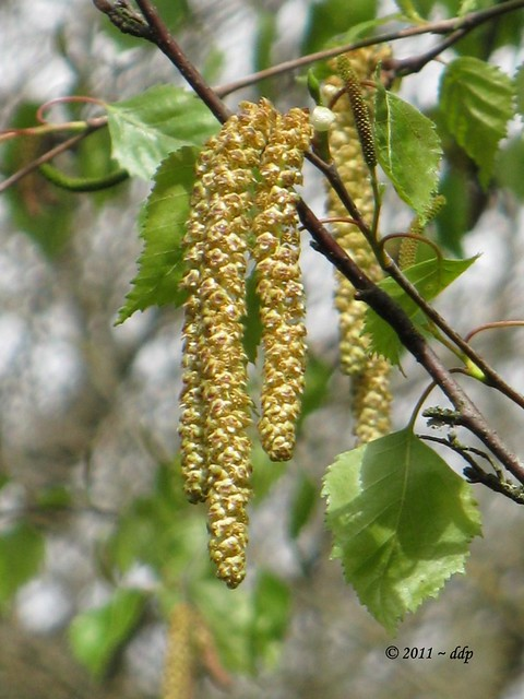 Tree Seeds Identification http://www.flickr.com/photos/delina/5682555192/