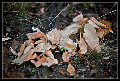 Leaf litter 2