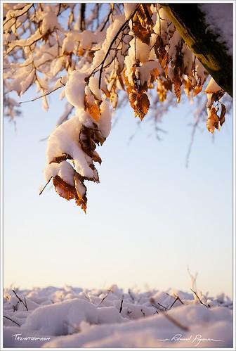 orange rougered cielsky bleublue jauneyellow canonef24105mmf4lisusm neigesnow canoneos5dmarkii couleurcolor floraflore feuilleleaf brindilletwig branchebranch leverdusoleildaybreaksunrise