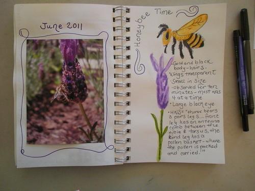 Honeybee entry (3)