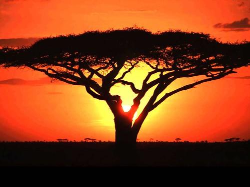africa, XXI secolo, edicola, on line