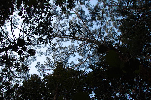 Bourail forest canopy