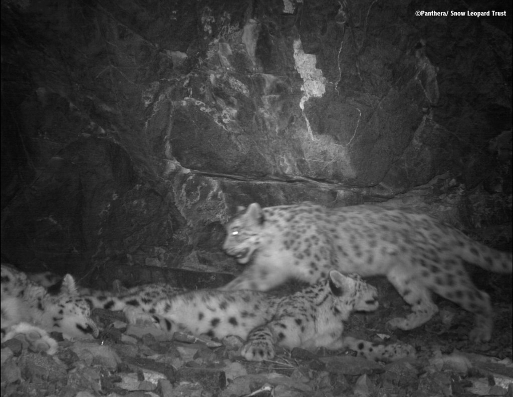 Relaxing in front of a camera trap