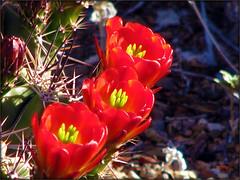 April in Tucson 2011